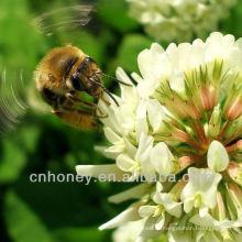 Органический натуральный чистый клеверный мед
