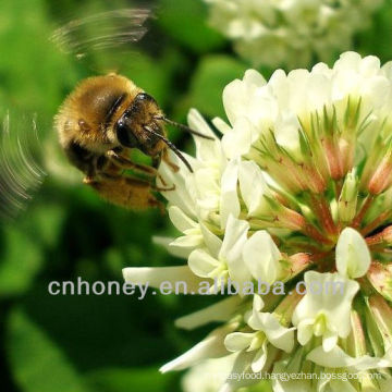 organic natural pure clover honey