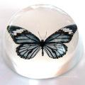 Arco pisapapeles de cristal transparente - logotipo de grabado libre