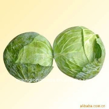 purchase green cabbage low price 2011(NEW)