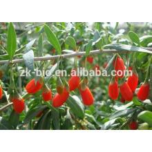 Высокое Качество Экстракт Wolfberry