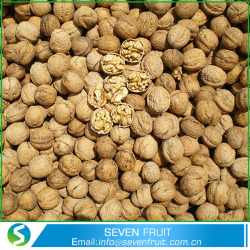 Natural Thin skin Chinese Small Walnuts in Shell