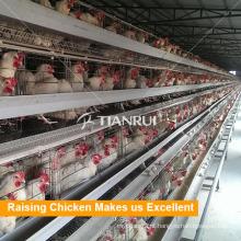 Tianrui Design Galvanizado Wire Mesh Uma Gaiola De Chiken Quadro