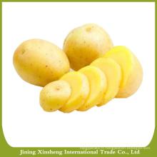 Spécifications des pommes de terre