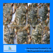 high quality best fresh mud crab