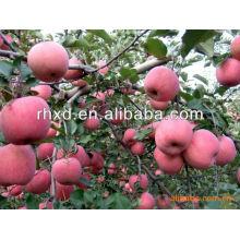 Deliciosa manzana de Cachemira