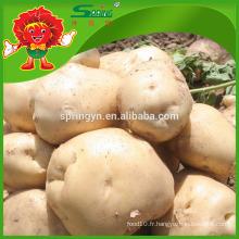 Pomme de terre jaune fraîche de haute qualité à la vente de pommes de terre fraîches