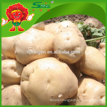 high quality fresh yellow potato on sale fresh russet potato