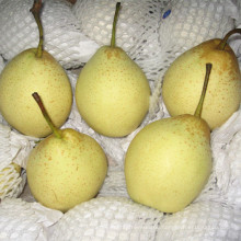 Export Quality Fresh New Crop Ya Pear