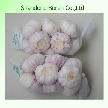 Fresh Garlic Normal White and Pure White