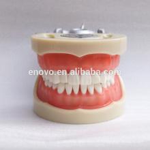 China modelo anatômico médico maxilar 13012 modelo maxilar dos dentes da goma macia anatômica 13012
