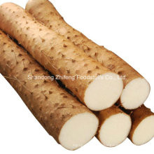 New Crop Yam for Exporting