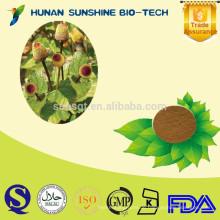 Bulk Pure spilanthol / 10: 1 Acmella oleracea Extract Pulver für Arzneimittel pharmazeutisches Produkt
