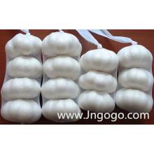 Nueva cosecha Buena calidad Normal White Garlic 5.0