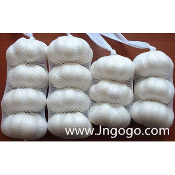 New Crop Good Quality Normal White Garlic 5.0