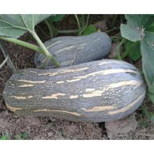 HPU11 Kuangba молоток оранжевый гибрид F1 тыквы семена