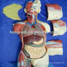 85CM (20parts) Anatómica Anatomía humana Modelo de torso de doble sexo femenino y masculino