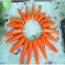 Китая нового урожая свежий красный морковь с более низкой ценой