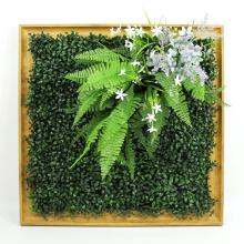 La mirada al por mayor natural planta la pared del marco de las plantas para la decoración interior