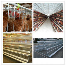 Poultry Farm Equipment of Chicken Cage for Broiler and Layer