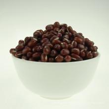 azuki bean small red bean 2016 crop high quality hot sale