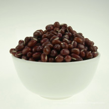 feijão azuki pequeno feijão vermelho 2016 colheita de alta qualidade venda quente