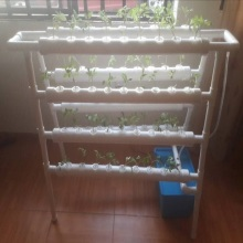 Hydroponic System to Grow