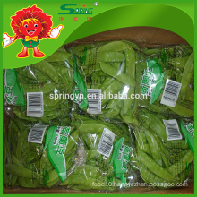 IQF Frozen pea pods high quality snow beans