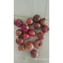 Prix du marché en gros de l'oignon rouge pour l'oignon rouge