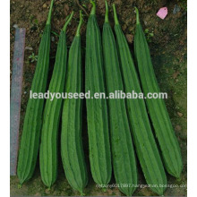 MLU01 Chuanggua strong heat resistant hybrid ridge luffa seeds for planting