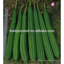 MLU01 Chuanggua forte resistente ao calor híbrido cume luffa sementes para o plantio