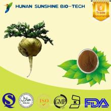 Polvo de raíz de maca de muestra gratuita como materia prima para la medicina sexual de larga duración