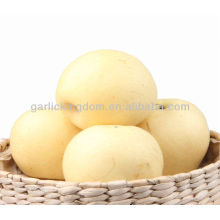 Новый урожай свежий золотой груша сладкий хрустящий груша Шаньдун груша