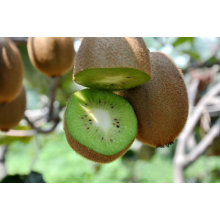 2011 fresh kiwi fruit with the best price