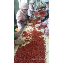 Goji Berry Orgânica USDA Certified, Ningxia Goji Berry, Goji Chinês
