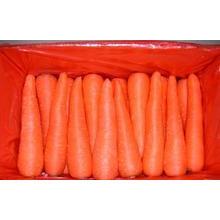 Китайский новый /Fresh урожая Морковь свежая морковь PE