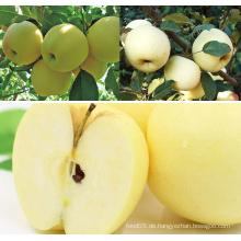 Golden Delicious Äpfel Frischer Apfel