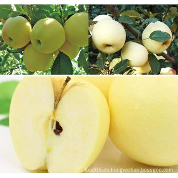Golden Delicious Apple Apple fresco
