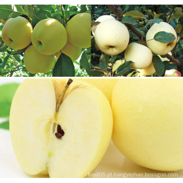 Golden Delicious Apple Apple