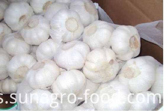 The Round White Garlic