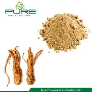 Traditional Herbal Medicine Angelica Extract Powder