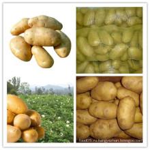 Хороший качественный свежий картофель для продажи
