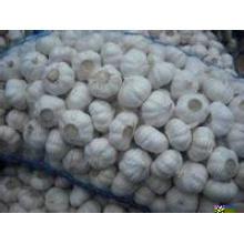Venda quente do alho branco fresco 2014