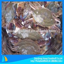 Fornecedor de vários congelados melhor qualidade azul natação caranguejo