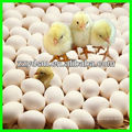 automatic chick egg hatch machine (high quality)