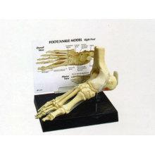 Foot Bone Mo...