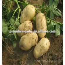 Type de produit de pommes de terre Pomme de terre fraiche de qualité
