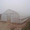 Film Single span greenhouse  for vegetables