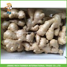 Fresh Ginger Exporter Chinese Ginger 250g up 30lbs PVC box