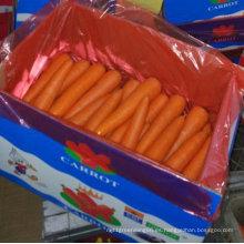 Calidad superior de zanahoria china fresca